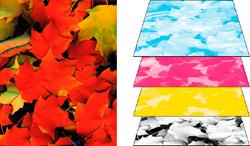 Просмотр цветоделения в Illustrator, Photoshop, Acrobat